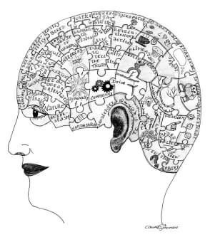 the gifted highly complex brain