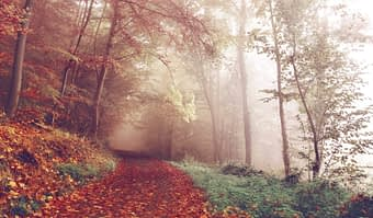 the counselling journey - an autumn path